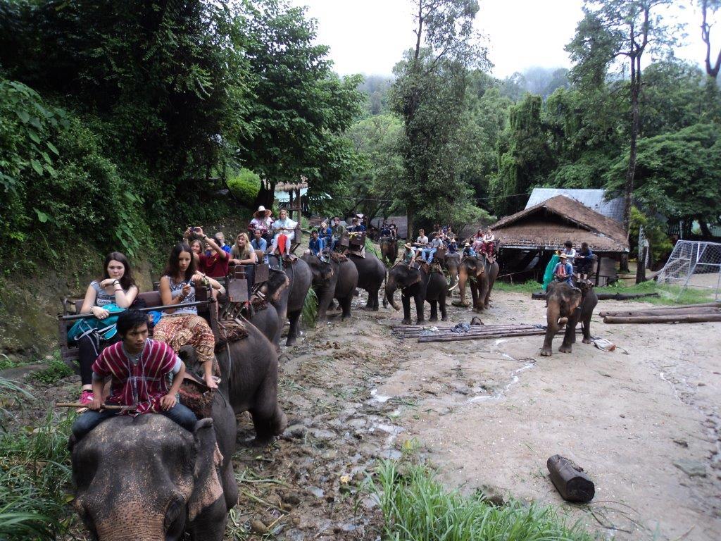con los elefantes